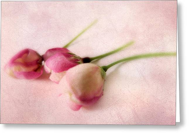 Flower Blossom Greeting Cards - Blushing Blossom Greeting Card by Jessica Jenney