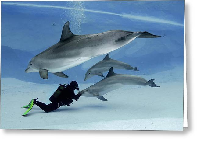 Trio Greeting Cards - Bottlenose dolphins in an aquarium Greeting Card by Science Photo Library