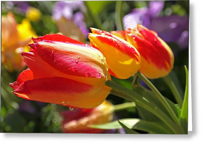 Red Tulips Greeting Cards - Bowing Tulips Greeting Card by Rona Black
