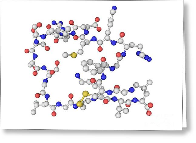 Peptide Greeting Cards - Brain Natriuretic Peptide Molecule Greeting Card by Laguna Design