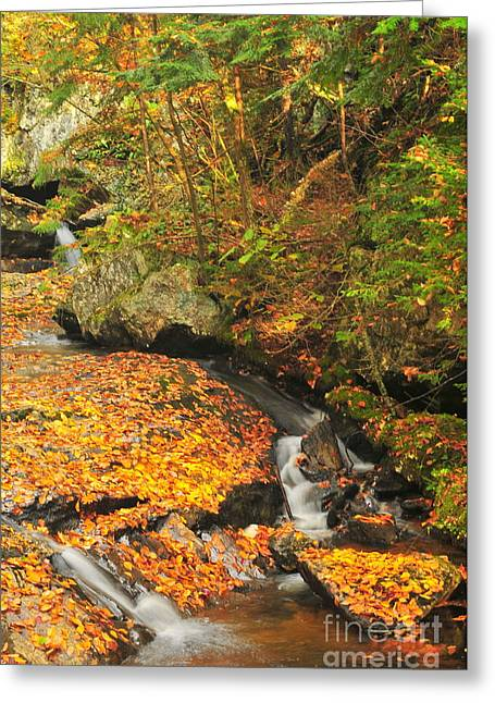 Brook Photographs Greeting Cards - Brook Greeting Card by Catherine Reusch  Daley
