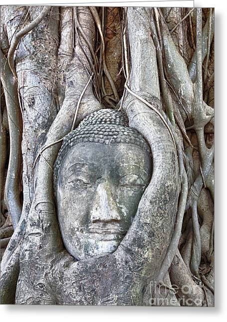 Statue Portrait Photographs Greeting Cards - Buddha Head in Tree Greeting Card by Fototrav Print