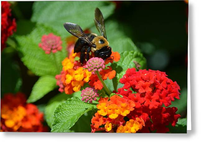 Jacksonville Greeting Cards - Bumble Bee Greeting Card by Gary Ayers