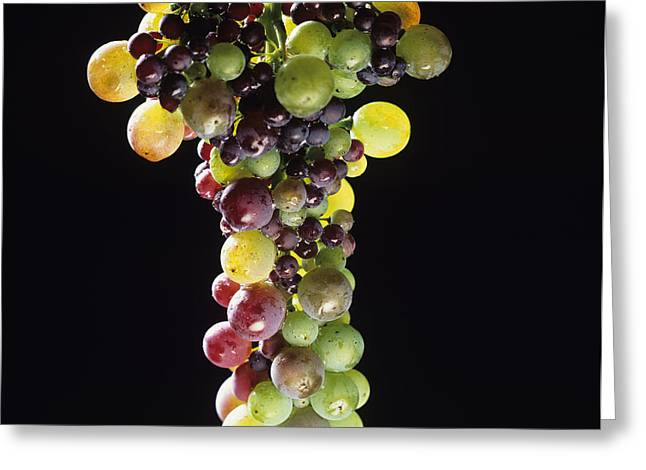 Bunch Greeting Cards - Bunch of grapes Greeting Card by Bernard Jaubert