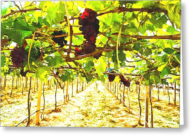Winemaking Paintings Greeting Cards - Bunch of red grapes  with green leaves in nature Greeting Card by Ammar Mas-oo-di