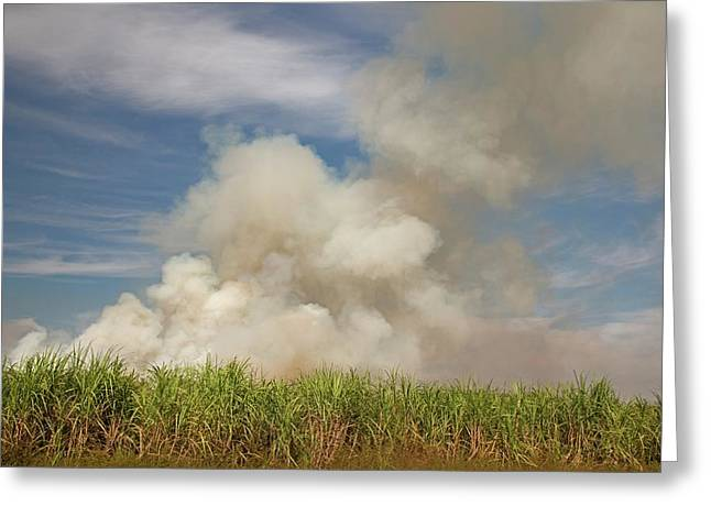 Burning Sugar Cane Greeting Card by Jim West