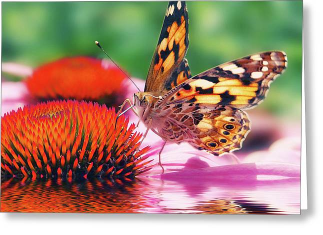 Floods Mixed Media Greeting Cards - Butterfly Greeting Card by Angela Doelling AD DESIGN Photo and PhotoArt