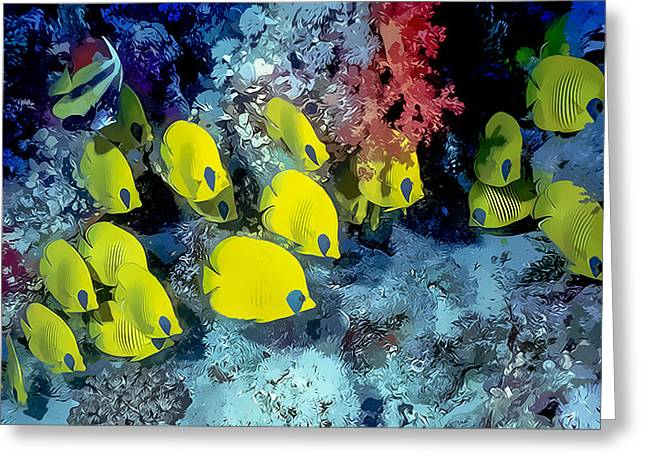 Pictures Sea Creatures Photographs Greeting Cards - Butterfly Fish Greeting Card by Roy Pedersen