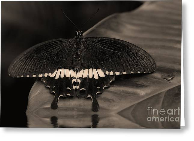 Butterflies Pyrography Greeting Cards - Butterfly Greeting Card by Riccardo Franke