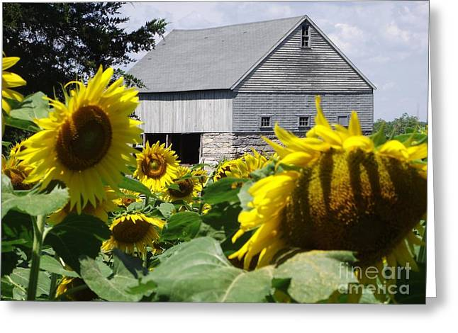 Buttonwood Farm Greeting Cards - Buttonwood Farm Greeting Card by Michelle Welles
