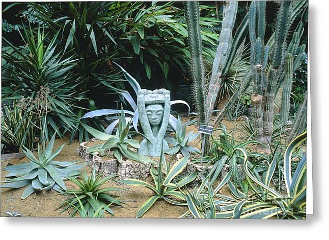 Cereus Greeting Cards - Cacti Garden Greeting Card by Vaughan Fleming