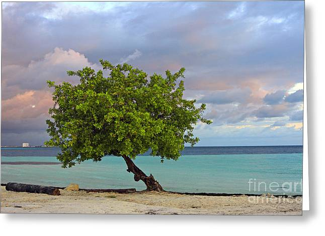 Cancun Greeting Cards - Cancun Morning Greeting Card by Charline Xia