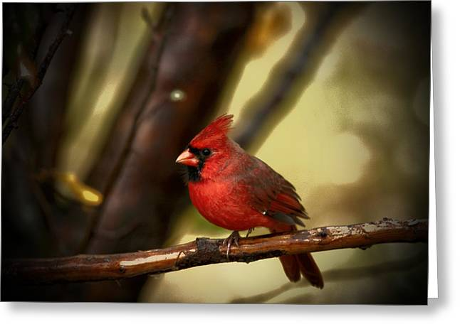Bird On Tree Greeting Cards - Cardinal Pose Greeting Card by Karol  Livote