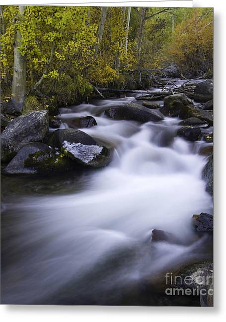 Water Flowing Greeting Cards - Cascading Stream Greeting Card by John Shaw