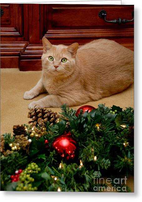 Wreath Greeting Cards - Cat and Christmas Wreath Greeting Card by Amy Cicconi