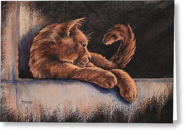 Kitten Pastels Greeting Cards - Catching the Last Rays Greeting Card by Cynthia House