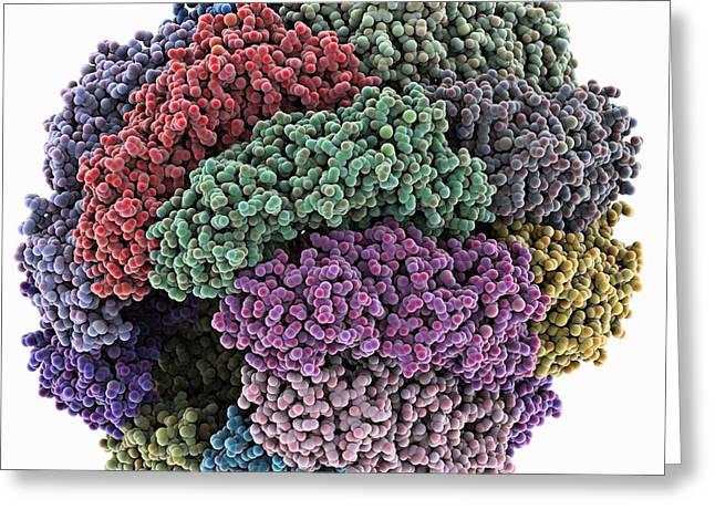 Atp Photographs Greeting Cards - Chaperonin Folding Protein Greeting Card by Laguna Design