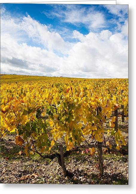 Chateau Lafite Rothschild Vineyards Greeting Card by Panoramic Images