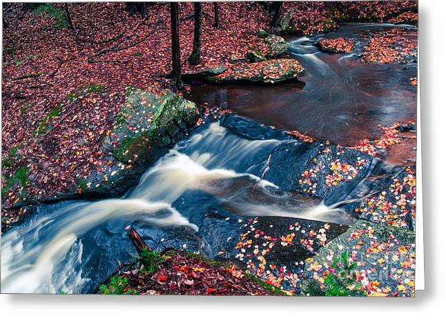 New Hampshire Leaves Greeting Cards - Chesterfield Gorge New Hampshire Greeting Card by Edward Fielding