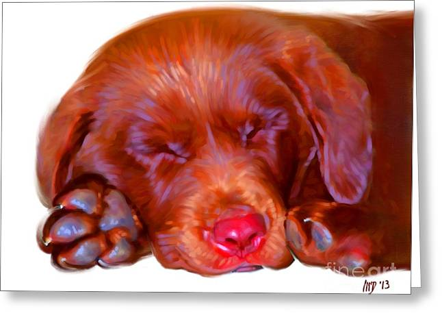 Cute Puppy Pictures Digital Art Greeting Cards - Chocolate Labrador Puppy Greeting Card by Iain McDonald