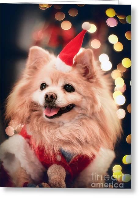 Christmas Eve Greeting Cards - Christmas Dog Greeting Card by Charline Xia