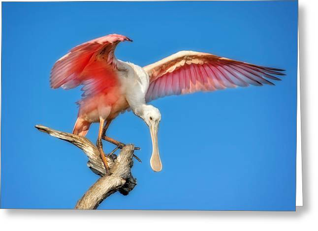Cleared For Takeoff Greeting Card by Mark Andrew Thomas