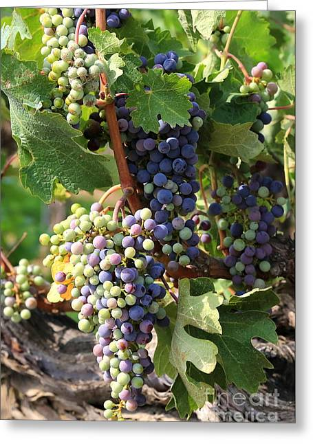 Fruit On The Vine Greeting Cards - Colorful Grapes Greeting Card by Carol Groenen