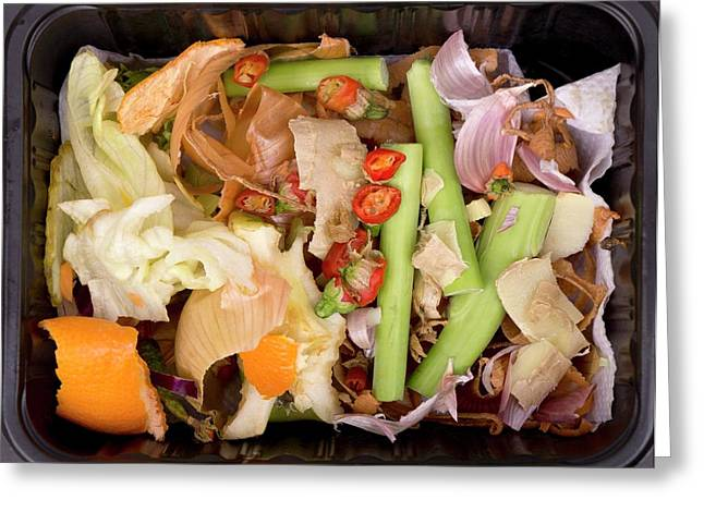 Composting Kitchen Waste Greeting Card by Sheila Terry
