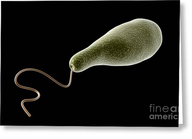 Conceptual Image Of Euglena Greeting Card by Stocktrek Images