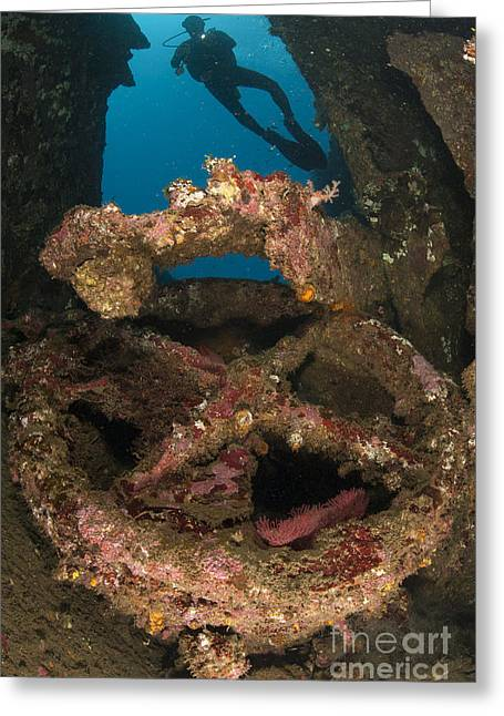 Steering Greeting Cards - Coral Encrusted Wreckage On The Liberty Greeting Card by Steve Jones