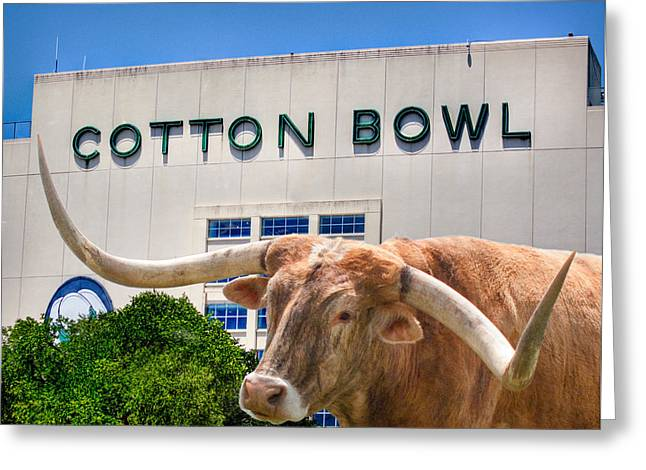 Steer Greeting Cards - Cotton Bowl Greeting Card by David and Carol Kelly