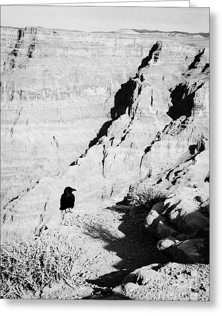 Guano Greeting Cards - crow standing on the edge of the west rim guano point Grand Canyon west arizona usa Greeting Card by Joe Fox