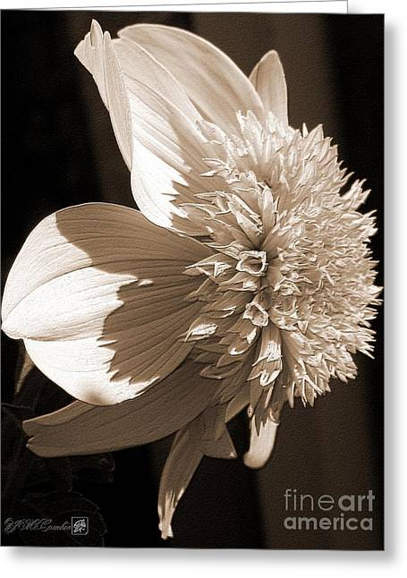 Picturesque Mixed Media Greeting Cards - Dahlia named Platinum Blonde Greeting Card by J McCombie