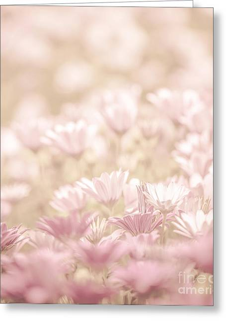 Merging Greeting Cards - Daisy flowers field Greeting Card by Anna Omelchenko