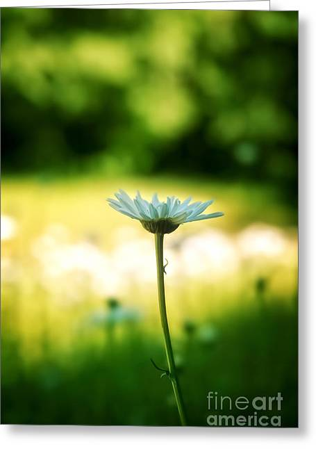 Vibrant Green Greeting Cards - Daisy Greeting Card by HD Connelly