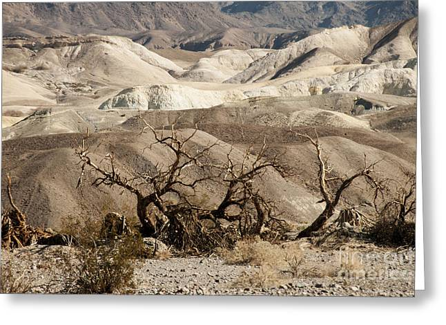 Geology Photographs Greeting Cards - Death Valley Greeting Card by Juli Scalzi