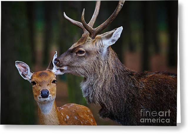 Animals Love Greeting Cards - Deer love Greeting Card by Nick  Biemans