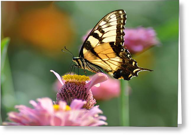 Delicate Wings Greeting Card by Bill Cannon