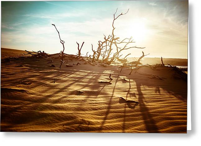 Sahara Sunlight Greeting Cards - Desert landscape Greeting Card by Perfect Lazybones