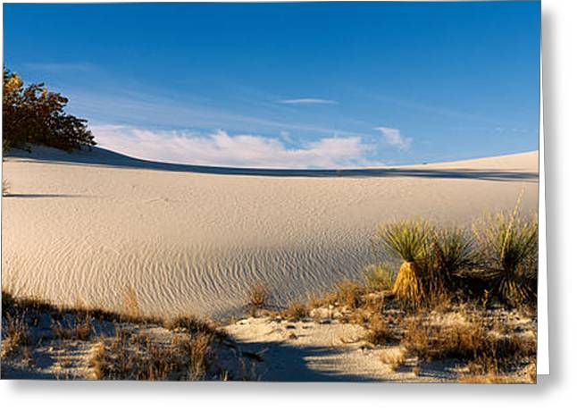 White Sands National Monument Greeting Cards - Desert Plants In A Desert, White Sands Greeting Card by Panoramic Images