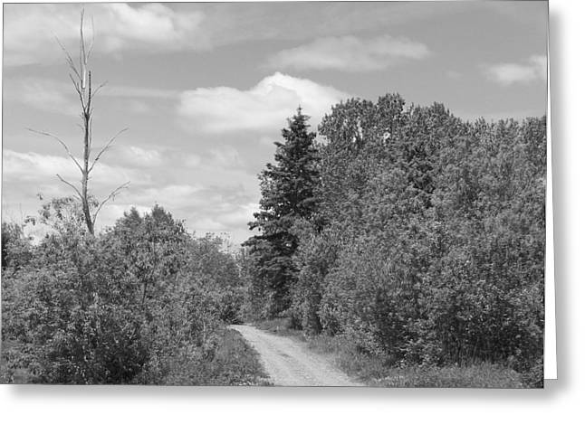 Rural Maine Roads Greeting Cards - Dirt Road Greeting Card by Gene Cyr