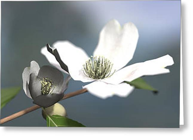 Depth Of Field Greeting Cards - Dogwood Greeting Card by Cynthia Decker