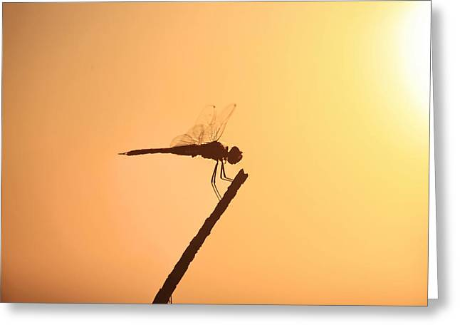 Dragonfly Silhouette  Greeting Card by Douglas Barnard