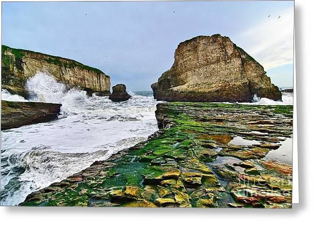 Sharks Cove Greeting Cards - Dramatic view of Shark Fin Cove in Santa Cruz California. Greeting Card by Jamie Pham