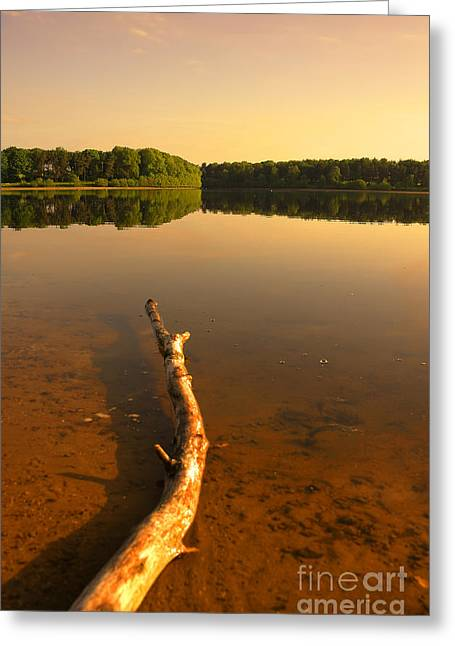 Drift Wood Greeting Card by Svetlana Sewell