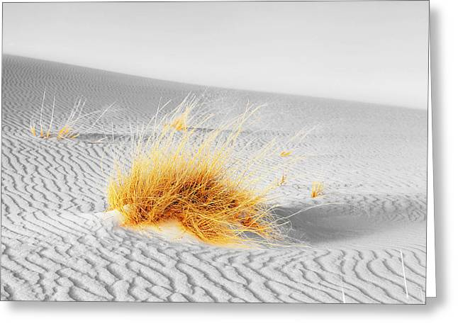 Dune Grass Greeting Card by Alexey Stiop
