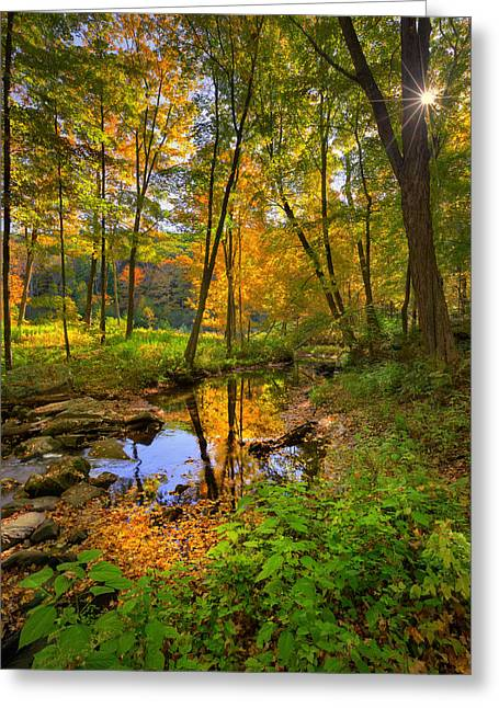 Burst Greeting Cards - Early Autumn Greeting Card by Bill  Wakeley
