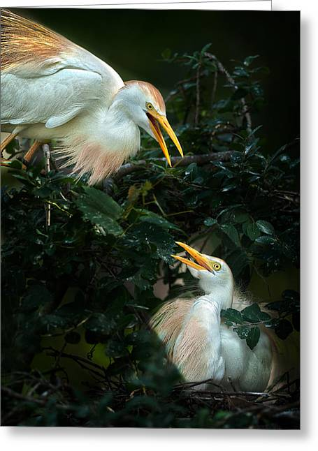 Cattle Egret Greeting Cards - Egrets Greeting Card by Rick Barnard