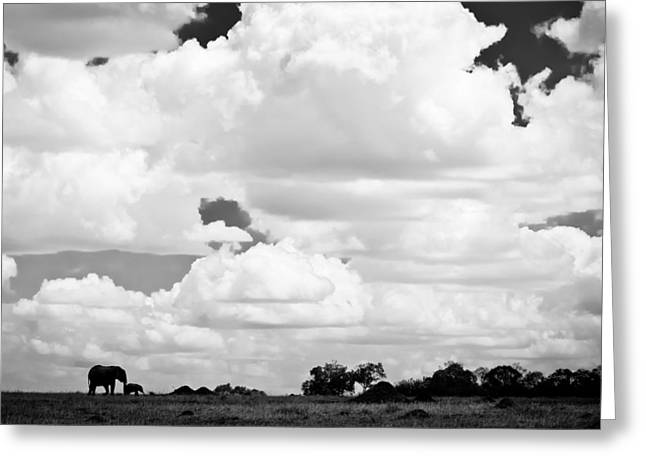 Animals Love Greeting Cards - Elephants Under the Sheltering African Sky Greeting Card by Jennifer Minette