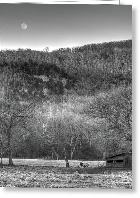 Boxley Valley Greeting Cards - Elk and Moon Greeting Card by Tony  Colvin